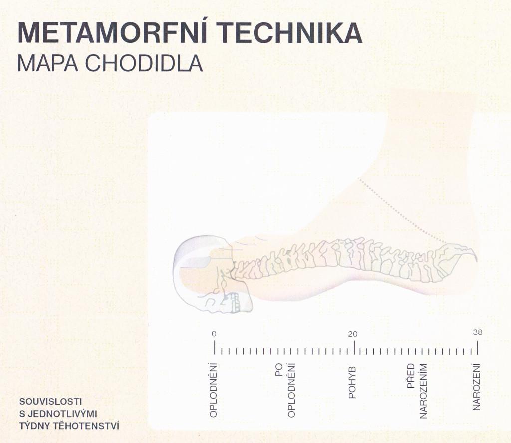 MT - mapa chodidla