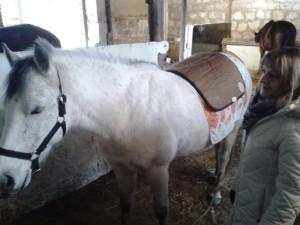 Kůň Samael a Amethyst BioMat