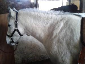 Kůň Samael